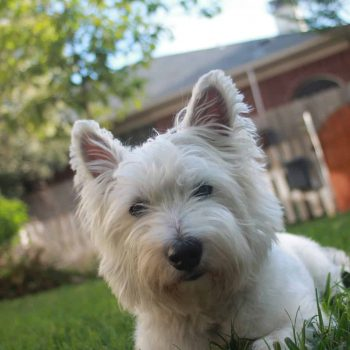 Puppy Proofing Your New Home in San Marcos, TX - Close Up of Terrier