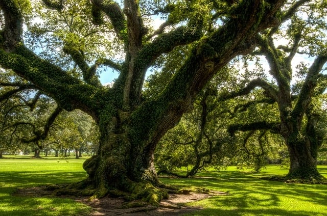 How Trees Can Affect Your Home's Resale Value